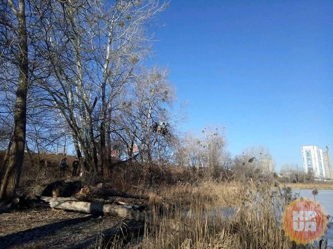 Киевлянин, поселившийся на дереве, может быть подсадной уткой
